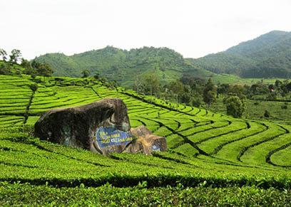 Pakej Trip Melancong Bandung Teh Walini