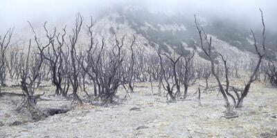 hutan-mati