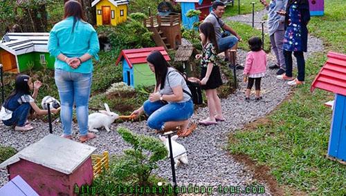 Rabbit-Forest-Bandung