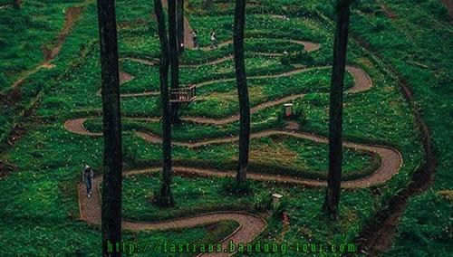 Trek-Khusus-di-Orchid-Forest-Bandung