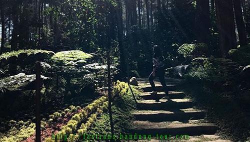bunga-raflesia-arnoldi-di Rabbit-Forest-Bandung