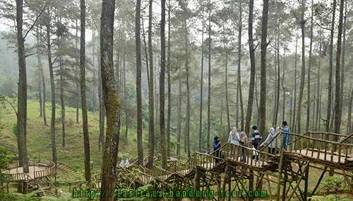 hutan-pinus-di-Orchid-Forest-Bandung