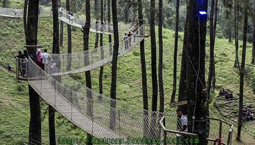 jembatan-gantung-kayu-di-Orchid-Forest-Bandung