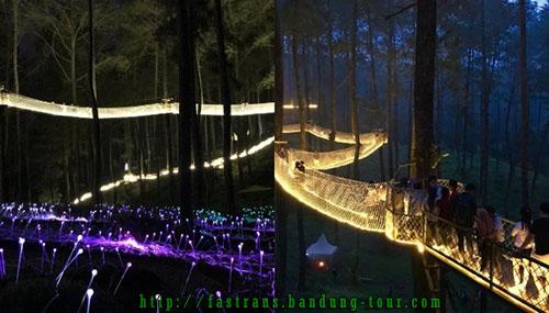 suasana-malam-di-Orchid-Forest-Bandung