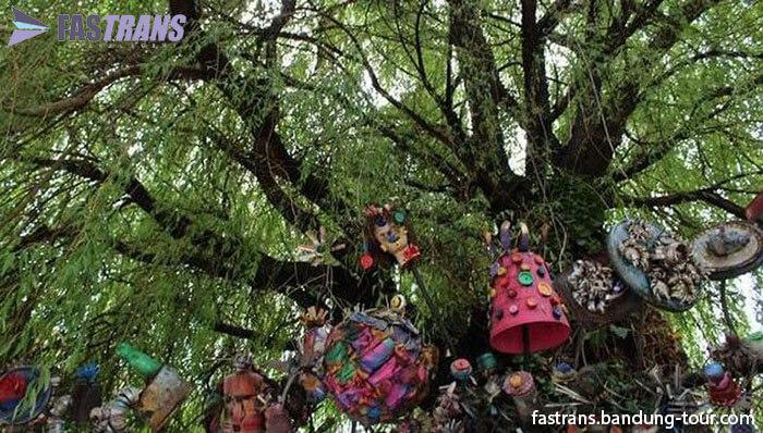 Pohon Menangis di Amerika Selain di Jember